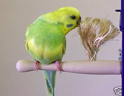 Parakeet/Budgie, Finch, Canary, Parrotlet Size Therapeutic Preening Perch